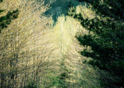 Prevost-Piste-printemps